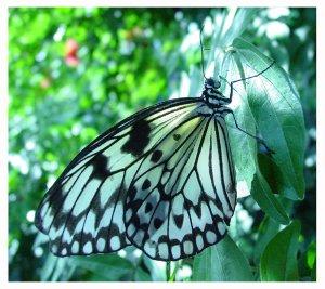 december_butterfly